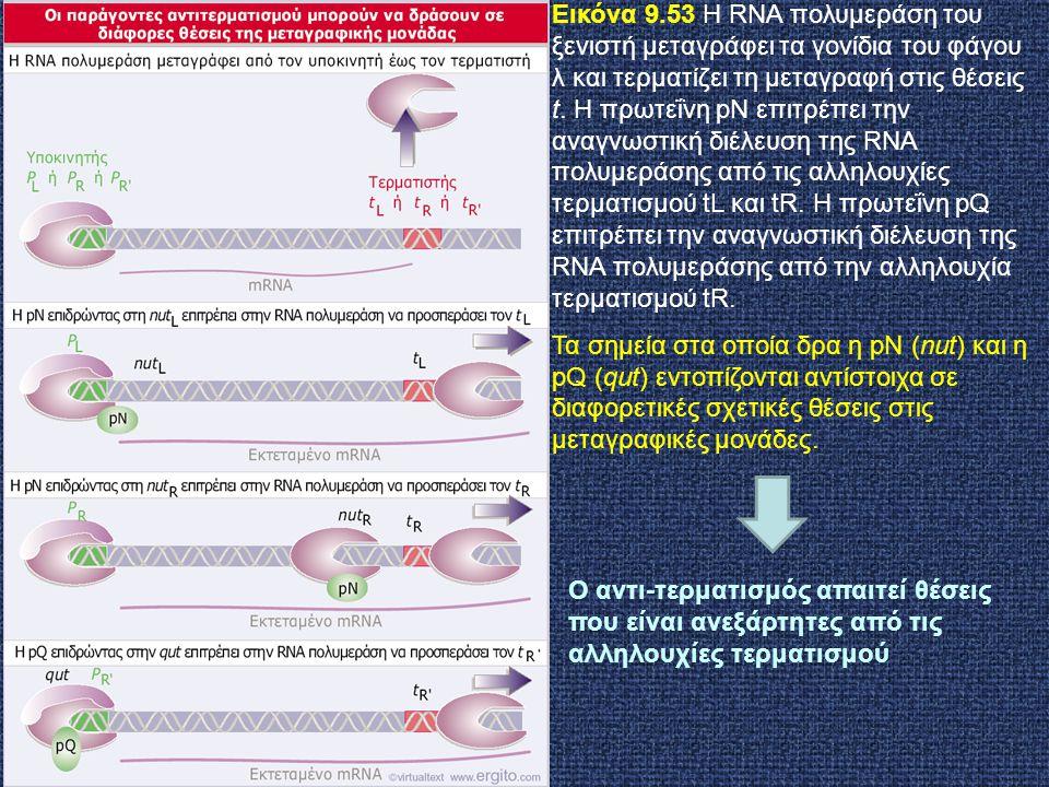 Εικόνα 9.53 Η RNA πολυμεράση του ξενιστή μεταγράφει τα γονίδια του φάγου λ και τερματίζει τη μεταγραφή στις θέσεις t. Η πρωτεΐνη pN επιτρέπει την αναγ