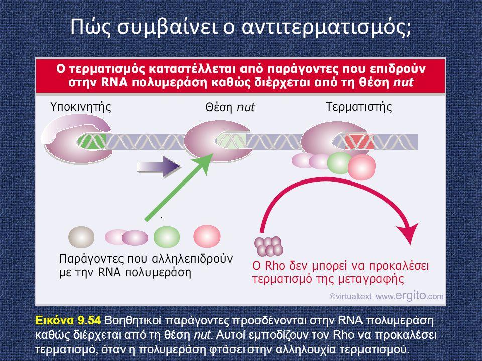 Εικόνα 9.54 Βοηθητικοί παράγοντες προσδένονται στην RNA πολυμεράση καθώς διέρχεται από τη θέση nut. Αυτοί εμποδίζουν τον Rho να προκαλέσει τερματισμό,
