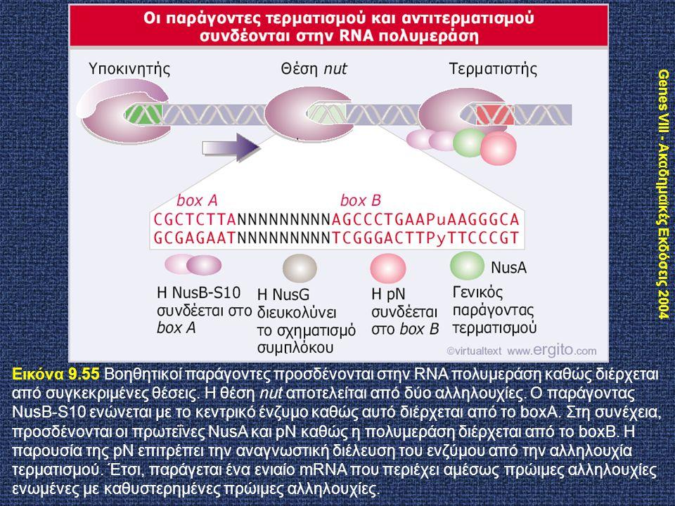 Genes VIII - Ακαδημαϊκές Εκδόσεις 2004 Εικόνα 9.55 Βοηθητικοί παράγοντες προσδένονται στην RNA πολυμεράση καθώς διέρχεται από συγκεκριμένες θέσεις. Η