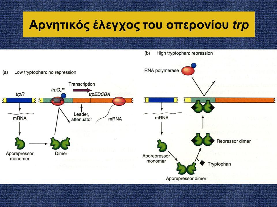 Σε όλες τις περιπτώσεις, η συσσώρευση της πρωτεΐνης αναστέλλει τη σύνθεσή της Κάθε ένας από τους ρυθμιστές είναι μια ριβοσωμική πρωτεΐνη που προσδένεται άμεσα στο rRNA, Eπιπλέον, όμως, διαθέτει και την ιδιότητα να προσδένεται στο δικό της mRNA