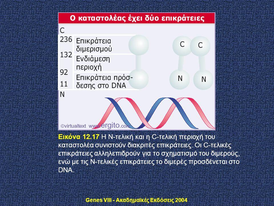 Genes VIII - Ακαδημαϊκές Εκδόσεις 2004 Εικόνα 12.17 H N-τελική και η C-τελική περιοχή του καταστολέα συνιστούν διακριτές επικράτειες. Οι C-τελικές επι
