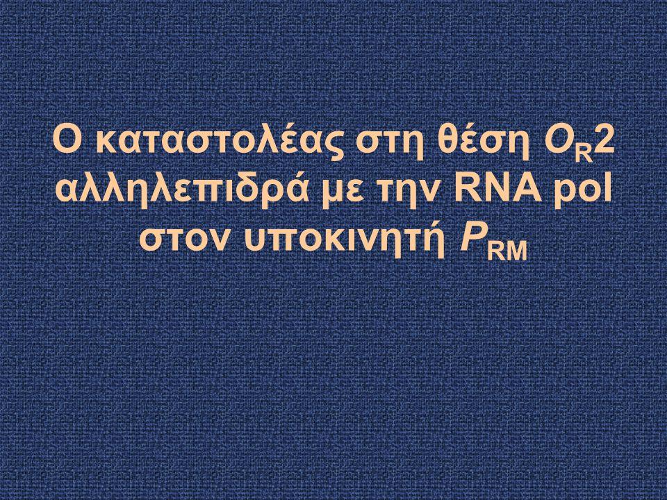 Ο καταστολέας στη θέση O R 2 αλληλεπιδρά με την RNA pol στον υποκινητή P RM
