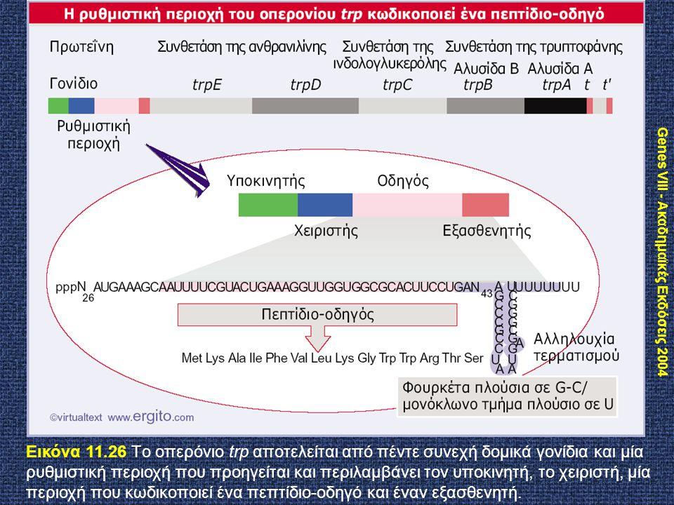 Genes VIII - Ακαδημαϊκές Εκδόσεις 2004 Εικόνα 11.26 Tο οπερόνιο trp αποτελείται από πέντε συνεχή δομικά γονίδια και μία ρυθμιστική περιοχή που προηγεί