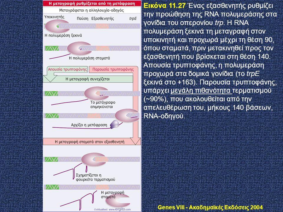 Genes VIII - Ακαδημαϊκές Εκδόσεις 2004 Εικόνα 11.27 Ένας εξασθενητής ρυθμίζει την προώθηση της RNA πολυμεράσης στα γονίδια του οπερονίου trp. Η RNA πο
