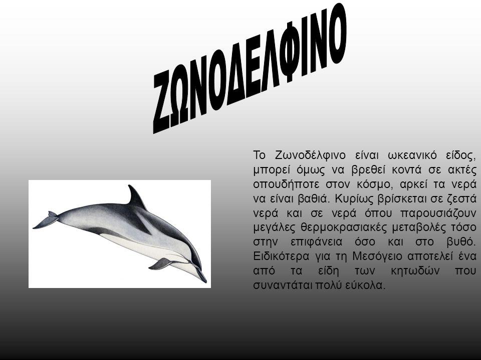 Το Zωνοδέλφινο είναι ωκεανικό είδος, μπορεί όμως να βρεθεί κοντά σε ακτές οπουδήποτε στον κόσμο, αρκεί τα νερά να είναι βαθιά. Κυρίως βρίσκεται σε ζεσ