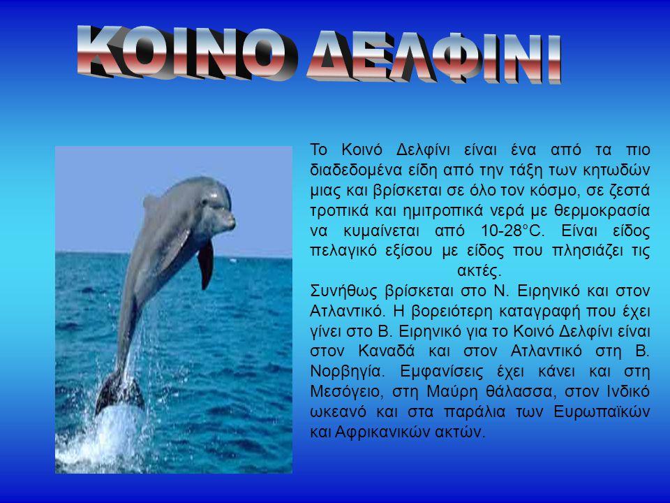 Το Κοινό Δελφίνι είναι ένα από τα πιο διαδεδομένα είδη από την τάξη των κητωδών μιας και βρίσκεται σε όλο τον κόσμο, σε ζεστά τροπικά και ημιτροπικά ν