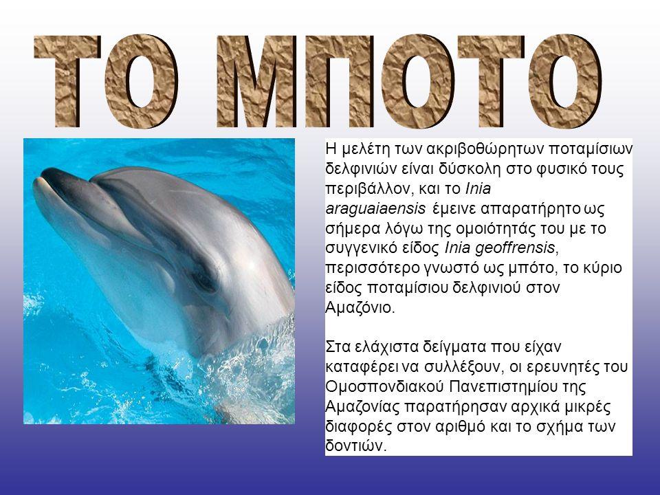 Η μελέτη των ακριβοθώρητων ποταμίσιων δελφινιών είναι δύσκολη στο φυσικό τους περιβάλλον, και το Inia araguaiaensis έμεινε απαρατήρητο ως σήμερα λόγω