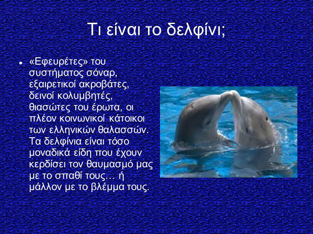 Τι είναι το δελφίνι; «Εφευρέτες» του συστήματος σόναρ, εξαιρετικοί ακροβάτες, δεινοί κολυμβητές, θιασώτες του έρωτα, οι πλέον κοινωνικοί κάτοικοι των