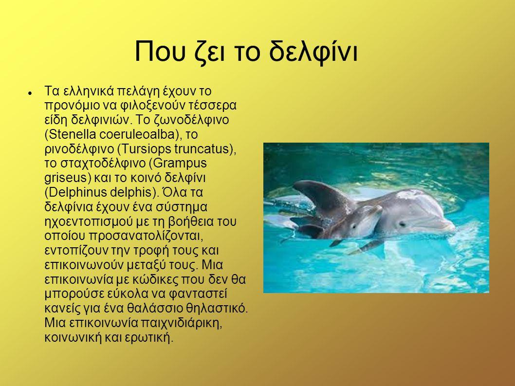 Που ζει το δελφίνι Τα ελληνικά πελάγη έχουν το προνόμιο να φιλοξενούν τέσσερα είδη δελφινιών. Το ζωνοδέλφινο (Stenella coeruleoalba), το ρινοδέλφινο (
