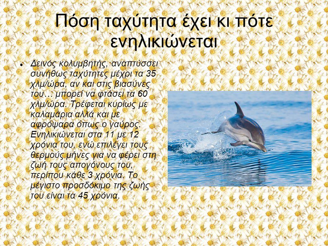 Πόση ταχύτητα έχει κι πότε ενηλικιώνεται Δεινός κολυμβητής, αναπτύσσει συνήθως ταχύτητες μέχρι τα 35 χλμ/ώρα, αν και στις βιασύνες του… μπορεί να φτάσ