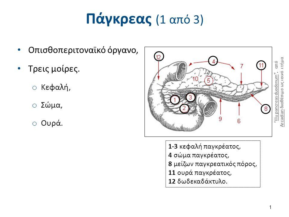 Πάγκρεας (1 από 3) 1 1-3 κεφαλή παγκρέατος, 4 σώμα παγκρέατος, 8 μείζων παγκρεατικός πόρος, 11 ουρά παγκρέατος, 12 δωδεκαδάκτυλο.
