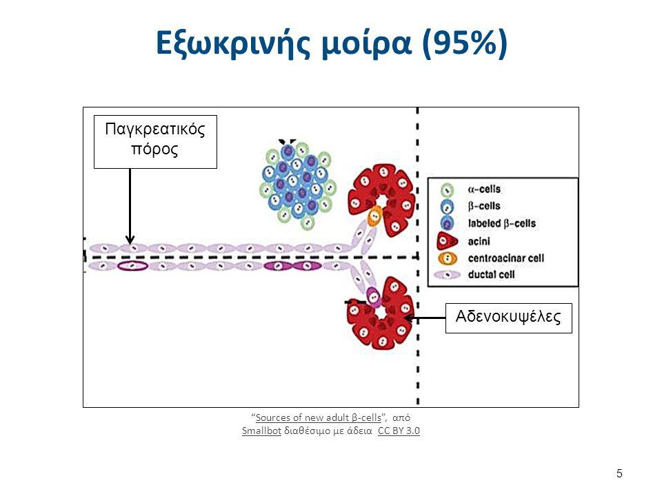 Και οι 3 εκδοχές καταλήγουν : Εντεροκινάση ενεργοποιεί τα πρωτεολυτικά ένζυμα μέσα στο πάγκρεας και κυρίως τη θρυψίνη η οποία με τη σειρά της ενεργοποιεί τα υπόλοιπα →→ Αυτοπεψία Παγκρέατος.