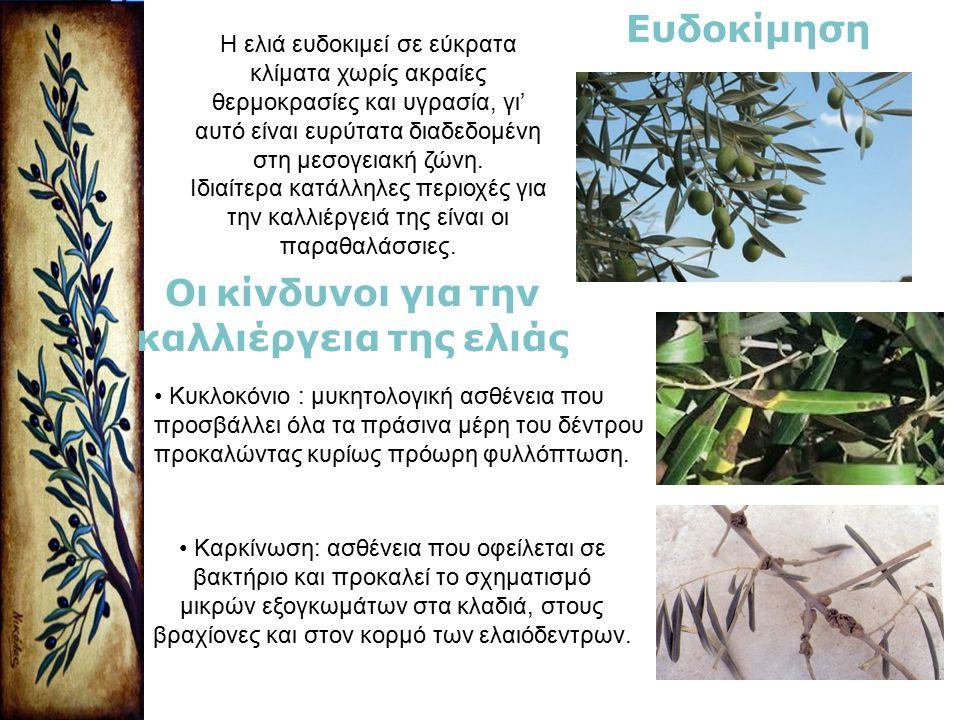Η ελιά ευδοκιμεί σε εύκρατα κλίματα χωρίς ακραίες θερμοκρασίες και υγρασία, γι' αυτό είναι ευρύτατα διαδεδομένη στη μεσογειακή ζώνη. Ιδιαίτερα κατάλλη