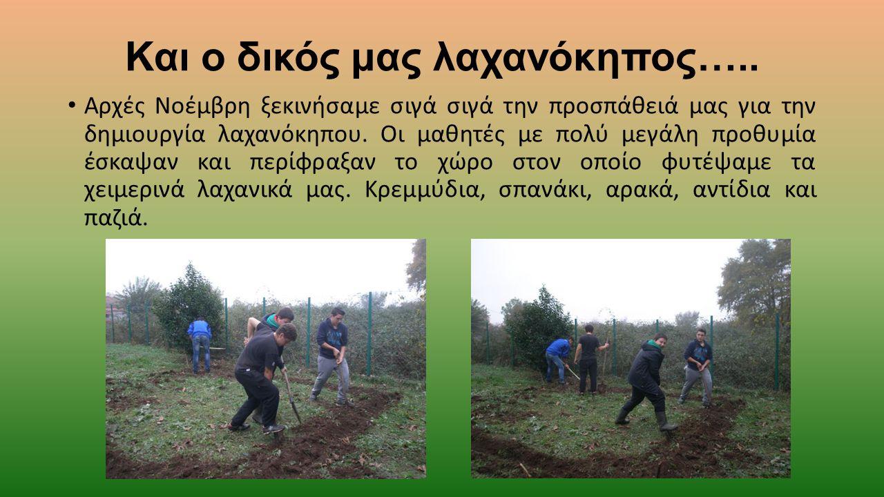 Και ο δικός μας λαχανόκηπος….. Αρχές Νοέμβρη ξεκινήσαμε σιγά σιγά την προσπάθειά μας για την δημιουργία λαχανόκηπου. Οι μαθητές με πολύ μεγάλη προθυμί