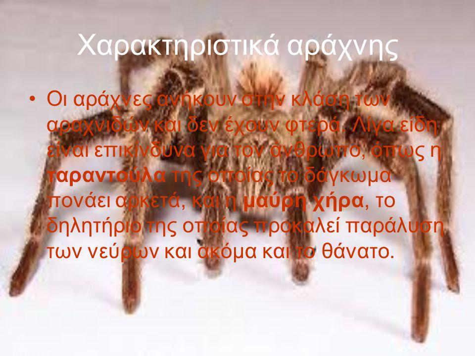 Χαρακτηριστικά αράχνης Οι αράχνες ανήκουν στην κλάση των αραχνιδών και δεν έχουν φτερά.