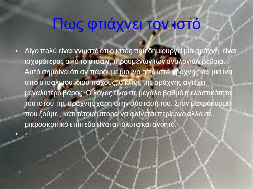 Πως φτιάχνει τον ιστό Λίγο πολύ είναι γνωστό ότι ο ιστός που δημιουργεί μια αράχνη, είναι ισχυρότερος από το ατσάλι, τηρουμένων των αναλογιών βέβαια.