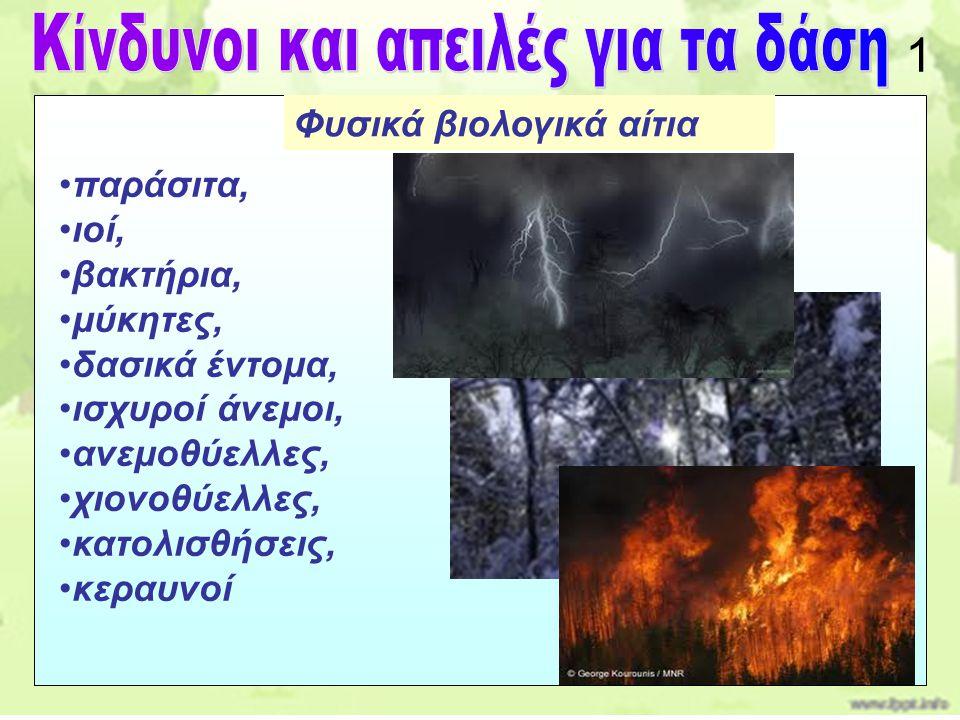παράσιτα, ιοί, βακτήρια, μύκητες, δασικά έντομα, ισχυροί άνεμοι, ανεμοθύελλες, χιονοθύελλες, κατολισθήσεις, κεραυνοί Φυσικά βιολογικά αίτια 1