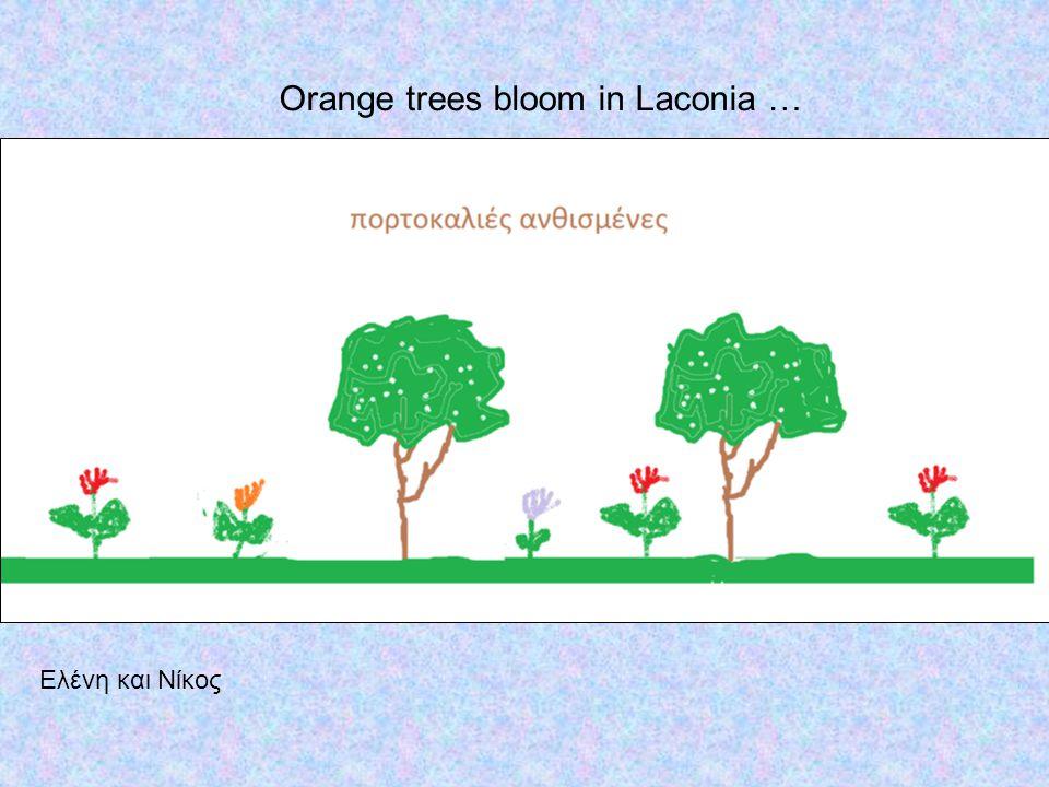 Ελένη και Νίκος Orange trees bloom in Laconia …