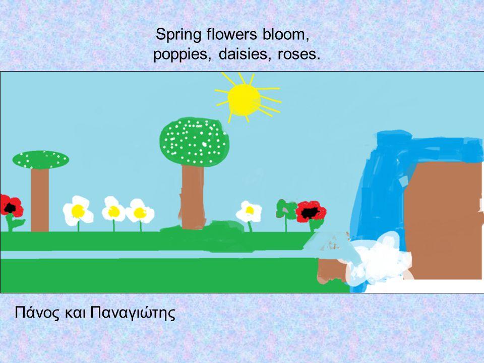Spring flowers bloom, poppies, daisies, roses. Πάνος και Παναγιώτης