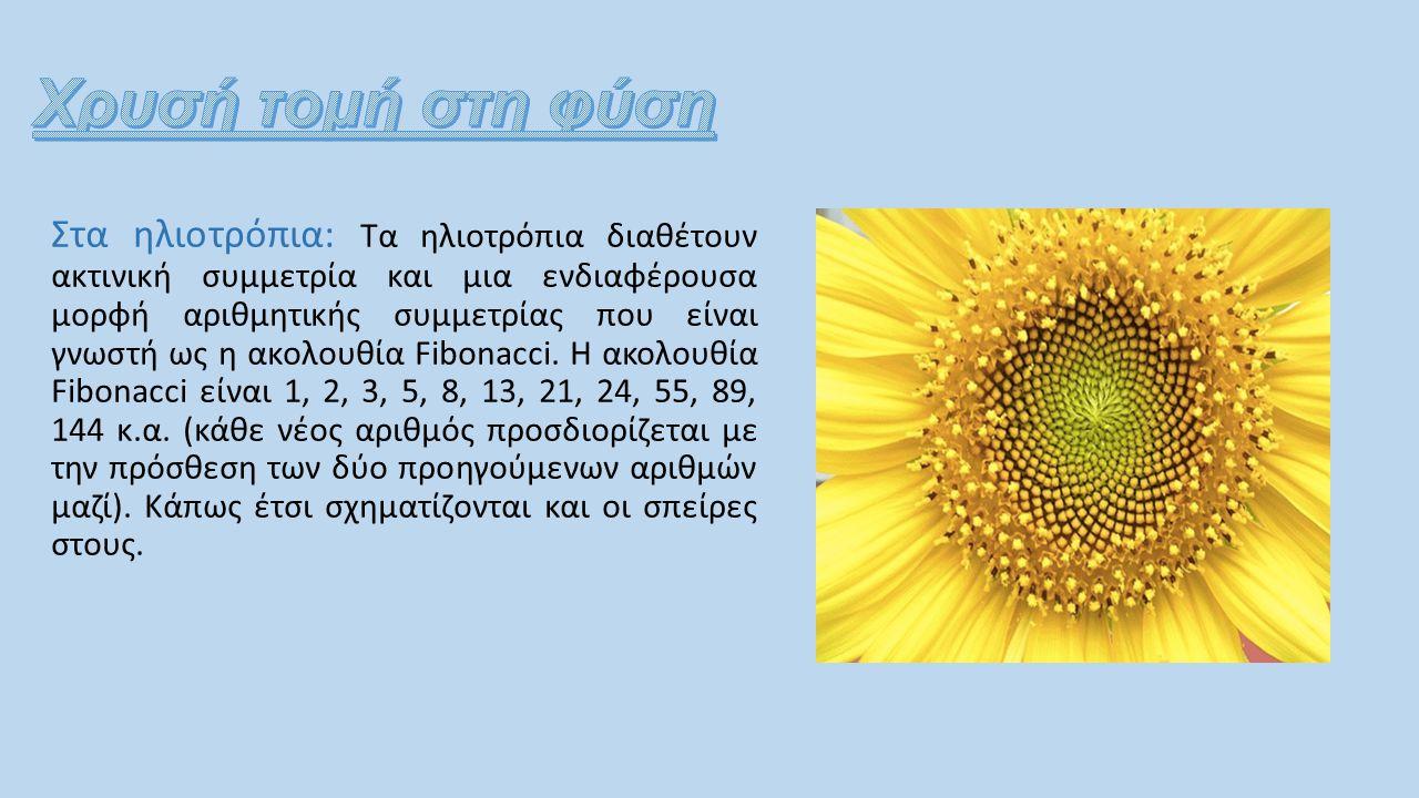Στα ηλιοτρόπια: Τα ηλιοτρόπια διαθέτουν ακτινική συμμετρία και μια ενδιαφέρουσα μορφή αριθμητικής συμμετρίας που είναι γνωστή ως η ακολουθία Fibonacci