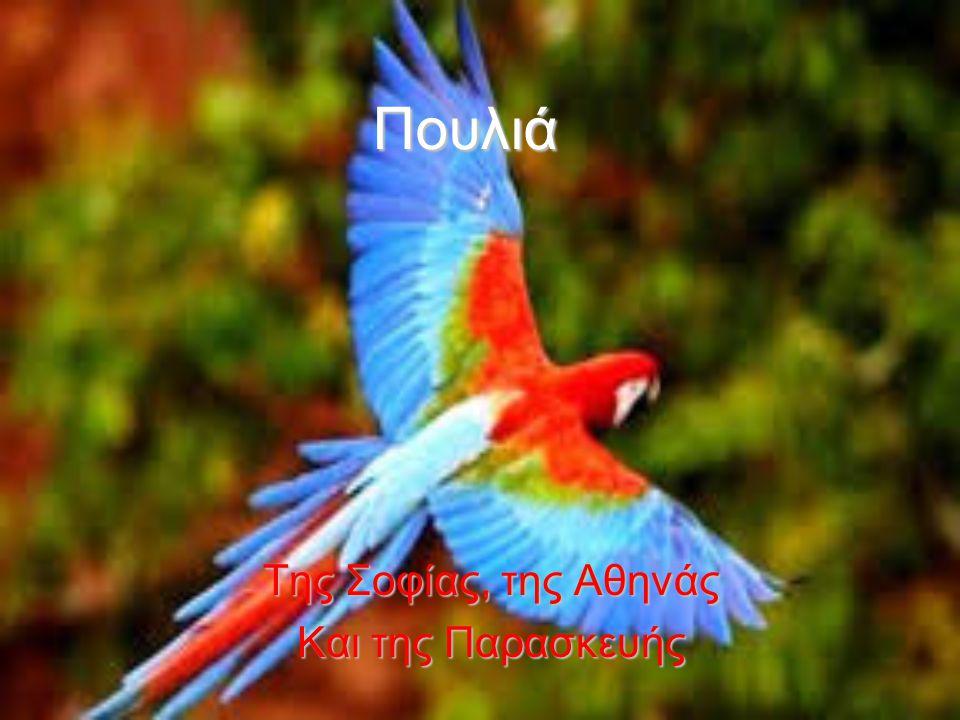 Πουλιά Της Σοφίας, της Αθηνάς Και της Παρασκευής