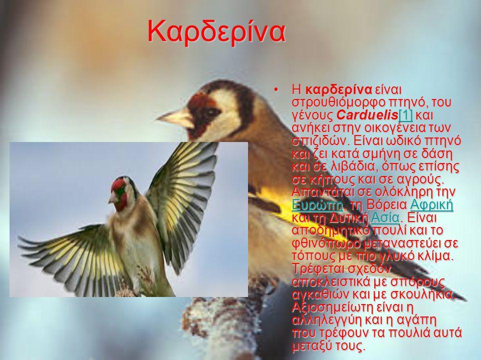 Καρδερίνα Η καρδερίνα είναι στρουθιόμορφο πτηνό, του γένους Carduelis[1] και ανήκει στην οικογένεια των σπιζιδών.