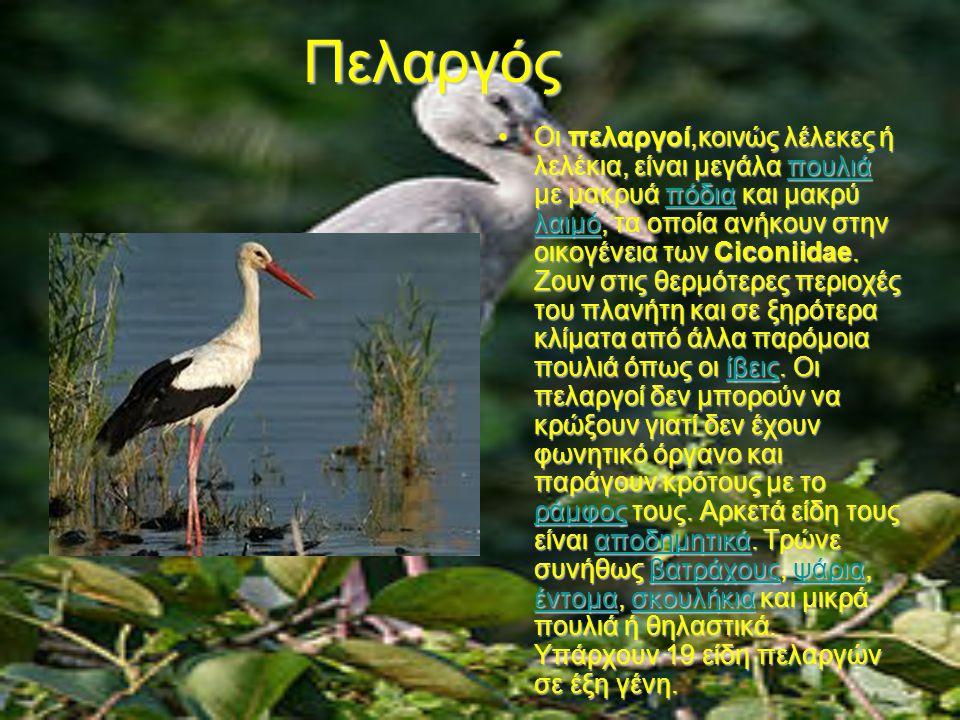 Πελαργός Οι πελαργοί,κοινώς λέλεκες ή λελέκια, είναι μεγάλα πουλιά με μακρυά πόδια και μακρύ λαιμό, τα οποία ανήκουν στην οικογένεια των Ciconiidae.