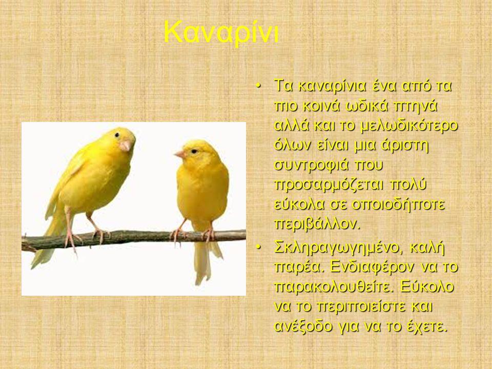 Καναρίνι Τα καναρίνια ένα από τα πιο κοινά ωδικά πτηνά αλλά και το μελωδικότερο όλων είναι μια άριστη συντροφιά που προσαρμόζεται πολύ εύκολα σε οποιοδήποτε περιβάλλον.