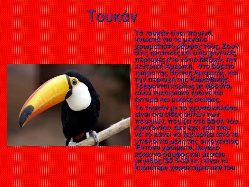 Τουκάν Τα τουκάν είναι πουλιά, γνωστά για το μεγάλο χρωματιστό ράμφος τους.