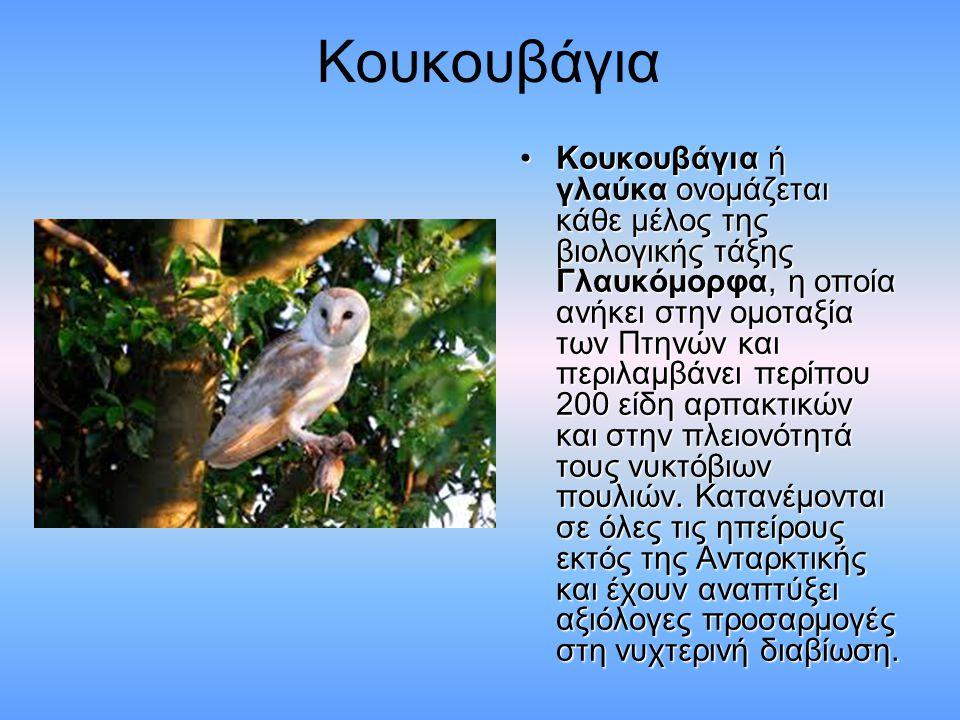 Κουκουβάγια Κουκουβάγια ή γλαύκα ονομάζεται κάθε μέλος της βιολογικής τάξης Γλαυκόμορφα, η οποία ανήκει στην ομοταξία των Πτηνών και περιλαμβάνει περίπου 200 είδη αρπακτικών και στην πλειονότητά τους νυκτόβιων πουλιών.