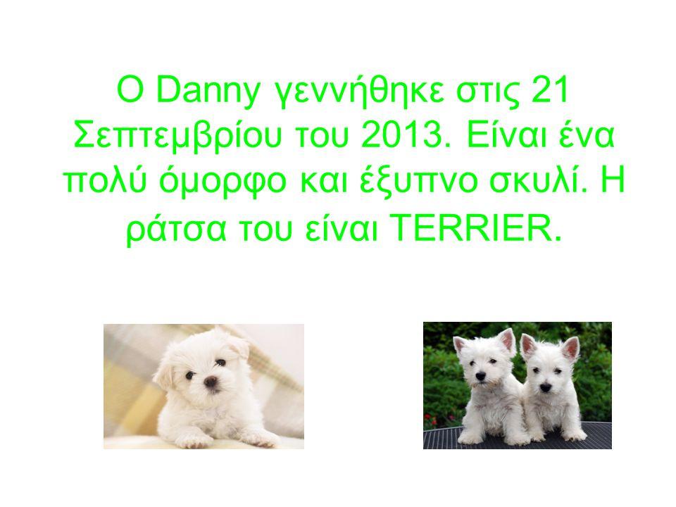 Ο Danny γεννήθηκε στις 21 Σεπτεμβρίου του 2013. Είναι ένα πολύ όμορφο και έξυπνο σκυλί.