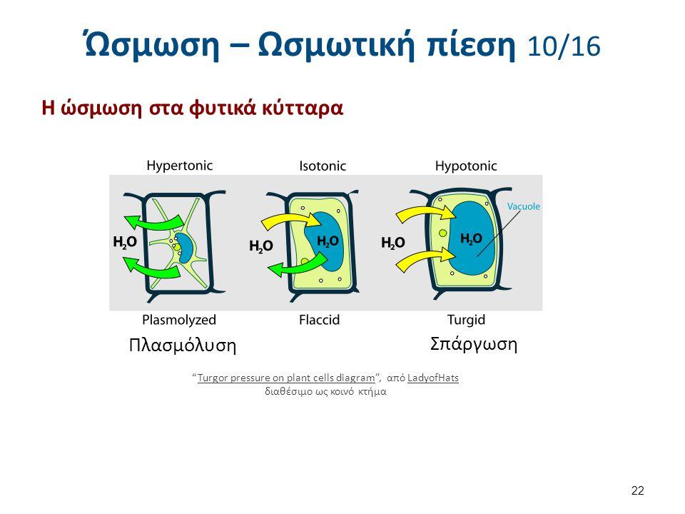 Ώσμωση – Ωσμωτική πίεση 10/16 Η ώσμωση στα φυτικά κύτταρα 22 Turgor pressure on plant cells diagram , από LadyofHats διαθέσιμο ως κοινό κτήμαTurgor pressure on plant cells diagramLadyofHats Πλασμόλυση Σπάργωση