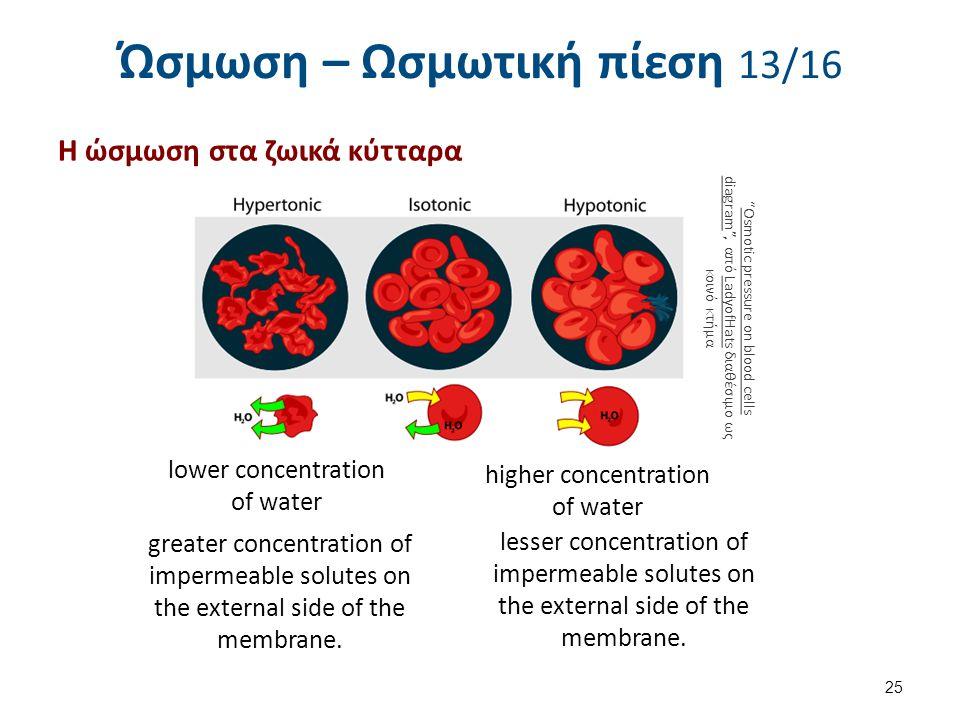Ώσμωση – Ωσμωτική πίεση 14/16 Ισότονο με το αίμα είναι και το υγρό των ιστών.
