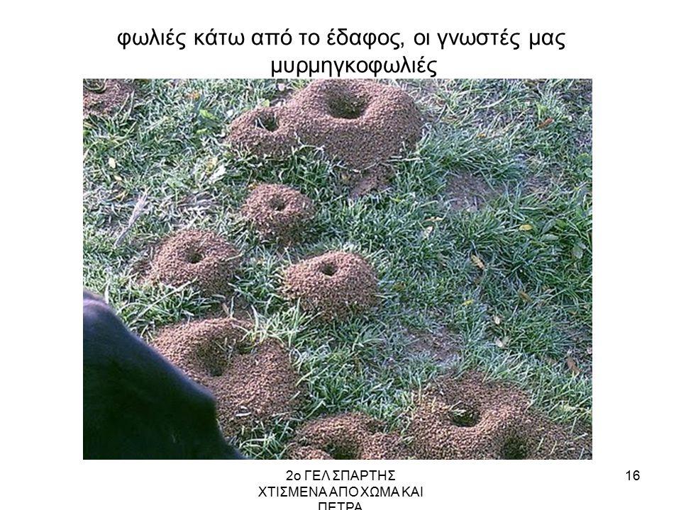 2ο ΓΕΛ ΣΠΑΡΤΗΣ ΧΤΙΣΜΕΝΑ ΑΠΟ ΧΩΜΑ ΚΑΙ ΠΕΤΡΑ 16 φωλιές κάτω από το έδαφος, οι γνωστές μας μυρμηγκοφωλιές