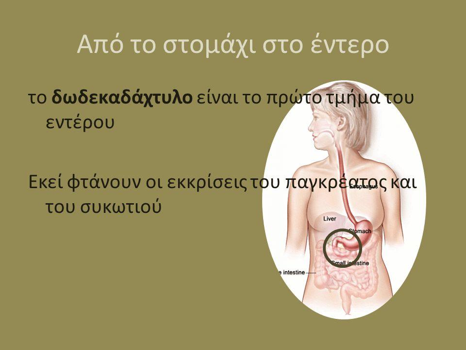 Από το στομάχι στο έντερο το δωδεκαδάχτυλο είναι το πρώτο τμήμα του εντέρου Εκεί φτάνουν οι εκκρίσεις του παγκρέατος και του συκωτιού