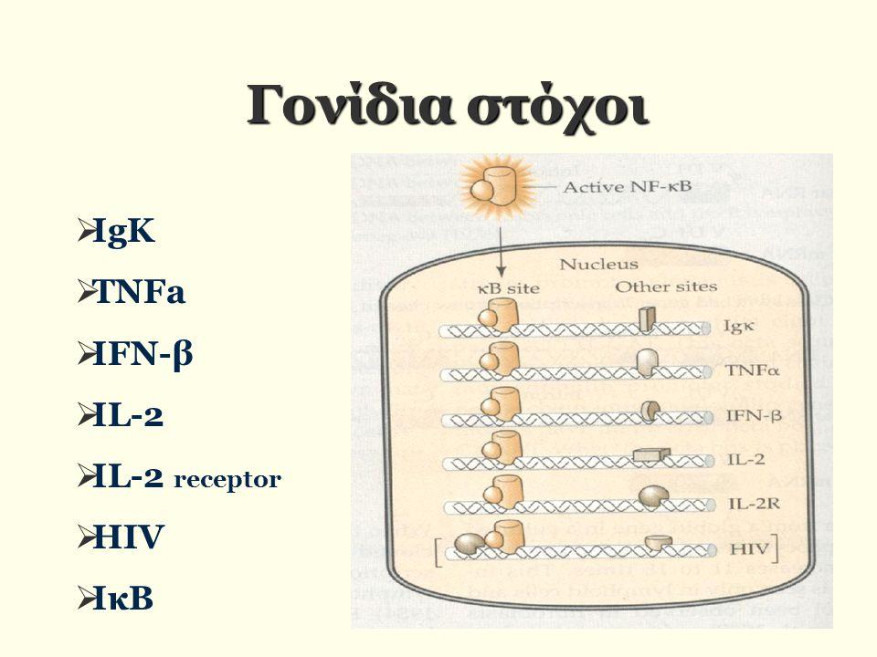  ΙgK  TNFa  IFN-β  IL-2  IL-2 receptor  HIV  ΙκΒ Γονίδια στόχοι