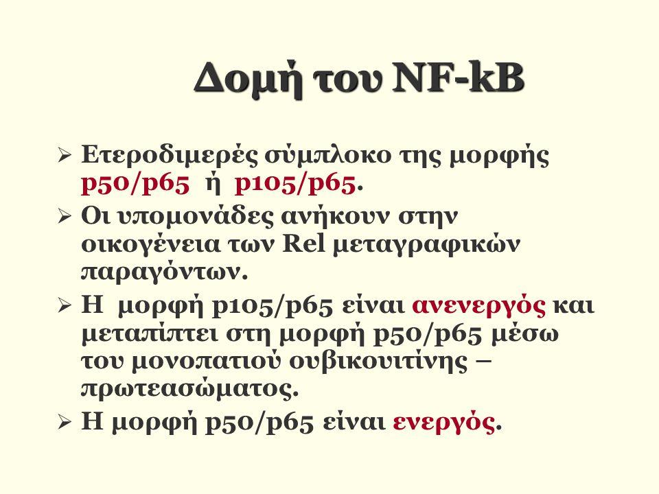 Δομή του ΝF-kB  Ετεροδιμερές σύμπλοκο της μορφής p50/p65 ή p105/p65.  Οι υπομονάδες ανήκουν στην οικογένεια των Rel μεταγραφικών παραγόντων.  Η μορ
