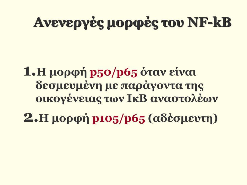 Ανενεργές μορφές του NF-kB 1. Η μορφή p50/p65 όταν είναι δεσμευμένη με παράγοντα της οικογένειας των ΙκΒ αναστολέων 2. Η μορφή p105/p65 (αδέσμευτη)