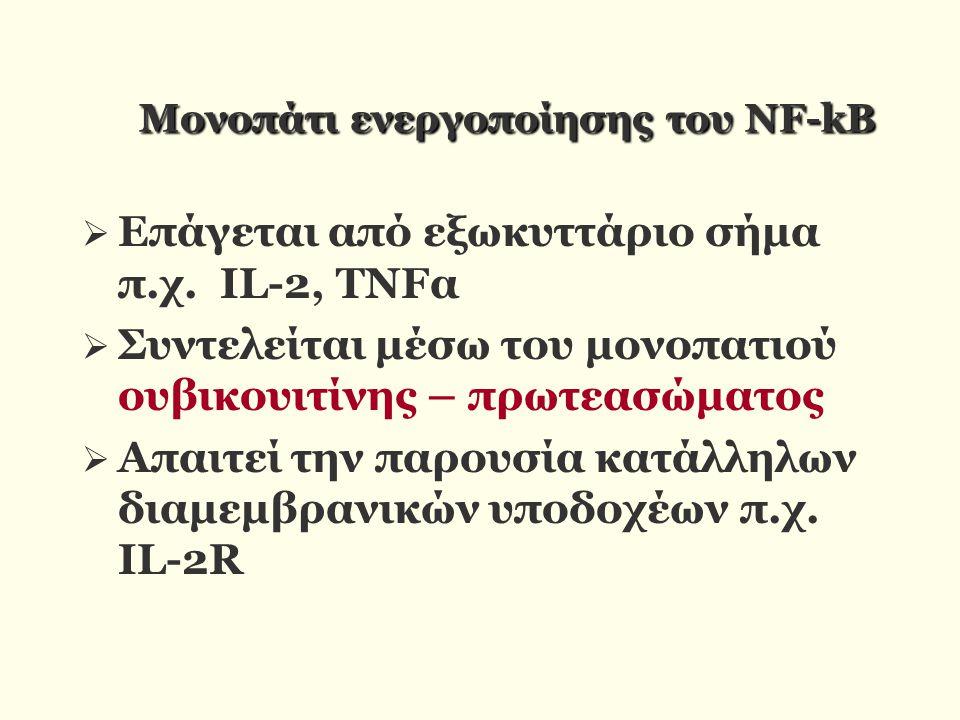 Moνοπάτι ενεργοποίησης του NF-kB Moνοπάτι ενεργοποίησης του NF-kB  Επάγεται από εξωκυττάριο σήμα π.χ. IL-2, TNFα  Συντελείται μέσω του μονοπατιού ου