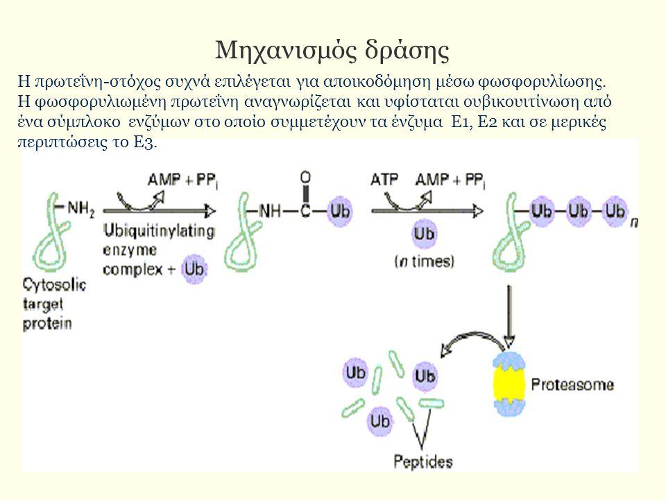 Μηχανισμός δράσης Η πρωτεΐνη-στόχος συχνά επιλέγεται για αποικοδόμηση μέσω φωσφορυλίωσης. Η φωσφορυλιωμένη πρωτεΐνη αναγνωρίζεται και υφίσταται ουβικο