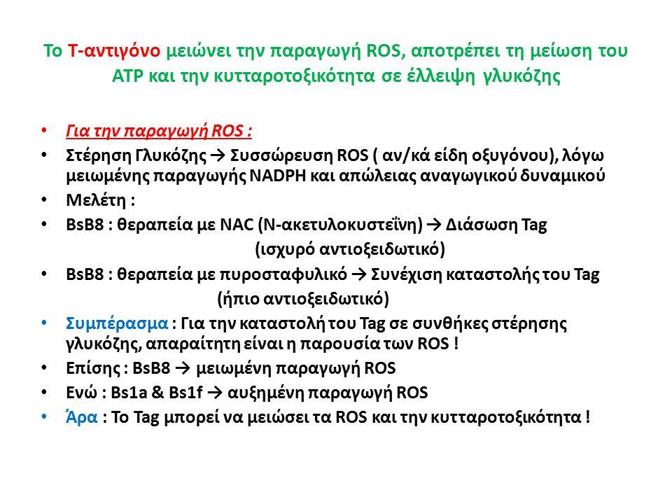 Το Τ-αντιγόνο μειώνει την παραγωγή ROS, αποτρέπει τη μείωση του ATP και την κυτταροτοξικότητα σε έλλειψη γλυκόζης Για την παραγωγή ROS : Στέρηση Γλυκόζης → Συσσώρευση ROS ( αν/κά είδη οξυγόνου), λόγω μειωμένης παραγωγής NADPH και απώλειας αναγωγικού δυναμικού Μελέτη : BsB8 : θεραπεία με NAC (Ν-ακετυλοκυστεΐνη) → Διάσωση Tag (ισχυρό αντιοξειδωτικό) BsB8 : θεραπεία με πυροσταφυλικό → Συνέχιση καταστολής του Tag (ήπιο αντιοξειδωτικό) Συμπέρασμα : Για την καταστολή του Tag σε συνθήκες στέρησης γλυκόζης, απαραίτητη είναι η παρουσία των ROS .