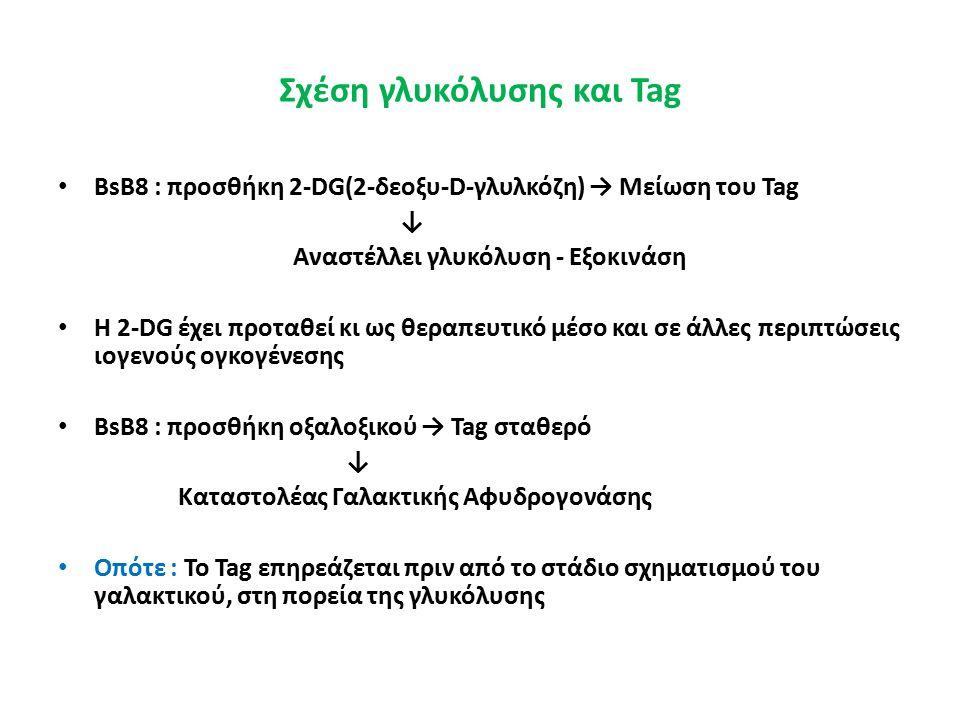 Σχέση γλυκόλυσης και Tag BsB8 : προσθήκη 2-DG(2-δεοξυ-D-γλυλκόζη) → Μείωση του Tag ↓ Αναστέλλει γλυκόλυση - Εξοκινάση Η 2-DG έχει προταθεί κι ως θεραπευτικό μέσο και σε άλλες περιπτώσεις ιογενούς ογκογένεσης BsB8 : προσθήκη οξαλοξικού → Tag σταθερό ↓ Καταστολέας Γαλακτικής Αφυδρογονάσης Οπότε : Το Tag επηρεάζεται πριν από το στάδιο σχηματισμού του γαλακτικού, στη πορεία της γλυκόλυσης