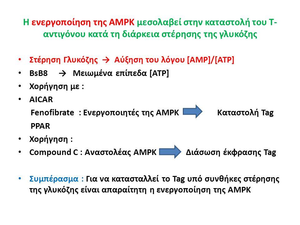 Η ενεργοποίηση της AMPK μεσολαβεί στην καταστολή του Τ- αντιγόνου κατά τη διάρκεια στέρησης της γλυκόζης Στέρηση Γλυκόζης → Αύξηση του λόγου [AMP]/[ATP] BsB8 → Μειωμένα επίπεδα [ATP] Χορήγηση με : AICAR Fenofibrate : Eνεργοποιητές της AMPK Καταστολή Tag PPAR Χορήγηση : Compound C : Αναστολέας AMPK Διάσωση έκφρασης Tag Συμπέρασμα : Για να κατασταλλεί το Tag υπό συνθήκες στέρησης της γλυκόζης είναι απαραίτητη η ενεργοποίηση της AMPK