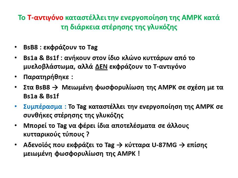 Το Τ-αντιγόνο καταστέλλει την ενεργοποίηση της AMPK κατά τη διάρκεια στέρησης της γλυκόζης BsB8 : εκφράζουν το Τag Bs1a & Bs1f : ανήκουν στον ίδιο κλώνο κυττάρων από το μυελοβλάστωμα, αλλά ΔΕΝ εκφράζουν το Τ-αντιγόνο Παρατηρήθηκε : Στα BsB8 → Μειωμένη φωσφορυλίωση της AMPK σε σχέση με τα Bs1a & Bs1f Συμπέρασμα : Το Tag καταστέλλει την ενεργοποίηση της AMPK σε συνθήκες στέρησης της γλυκόζης Μπορεί το Tag να φέρει ίδια αποτελέσματα σε άλλους κυτταρικούς τύπους .