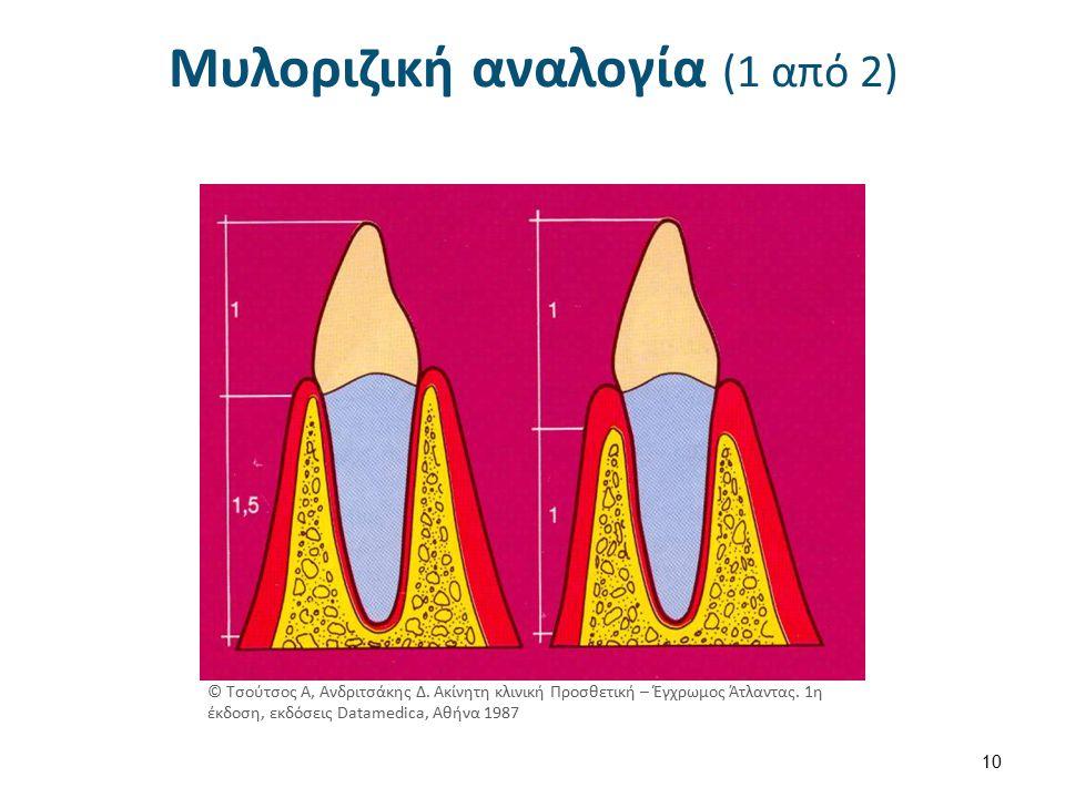 Μυλοριζική αναλογία (1 από 2) 10 © Τσούτσος Α, Ανδριτσάκης Δ.