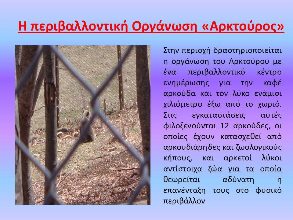 Στην περιοχή δραστηριοποιείται η οργάνωση του Αρκτούρου με ένα περιβαλλοντικό κέντρο ενημέρωσης για την καφέ αρκούδα και τον λύκο ενάμισι χιλιόμετρο έξω από το χωριό.