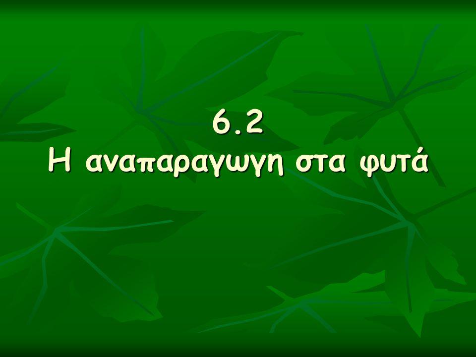 6.2 Η αναπαραγωγη στα φυτά