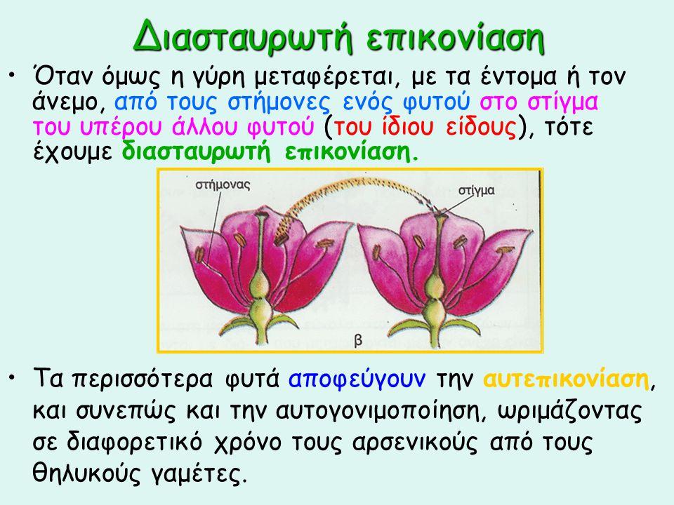 Διασταυρωτή επικονίαση Όταν όμως η γύρη μεταφέρεται, με τα έντομα ή τον άνεμο, από τους στήμονες ενός φυτού στο στίγμα του υπέρου άλλου φυτού (του ίδι