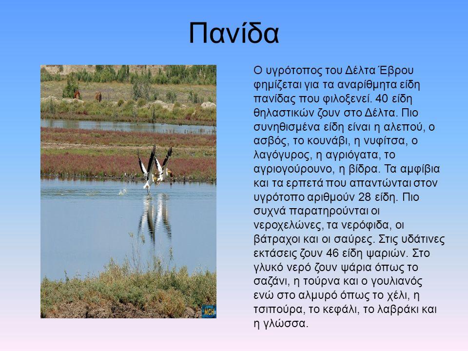 Πανίδα Ο υγρότοπος του Δέλτα Έβρου φημίζεται για τα αναρίθμητα είδη πανίδας που φιλοξενεί. 40 είδη θηλαστικών ζουν στο Δέλτα. Πιο συνηθισμένα είδη είν