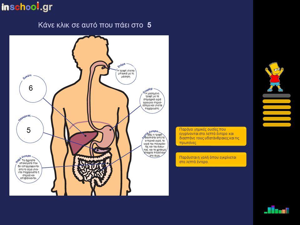 4 5 6 Τα άχρηστα υπολείματα που δεν απορροφώνται απο το αίμα γίνονται παχύρευστα ή στερεά και αποβάλλονται. Παράγει χημικές ουσίες που εγγρίνονται στο